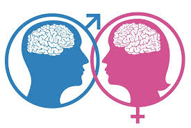 BRAINS OF WOMEN AND MEN