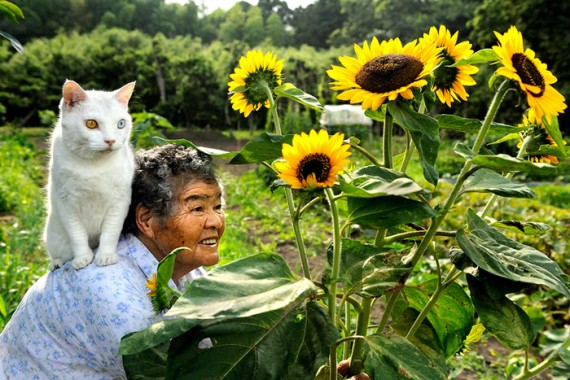 THE FARMER AND THE CATS